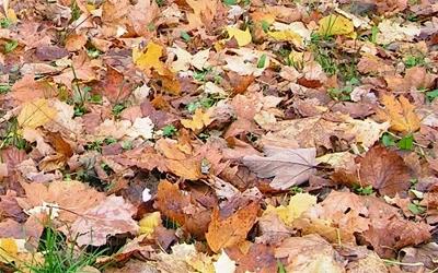 (c) mein-nachbarrecht.de: Rutschiges Herbstlaub